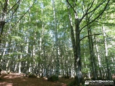 Parque Natural Gorbeia - Hayedo de Altube - Cascada de Gujuli;recorrido por madrid el tranco la pedr